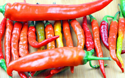 Organic Spicy Fresno Peppers Royalty Free Stock Images