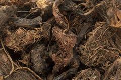 Organic Spikenard (Nardostachys jatamansi) roots. Stock Images