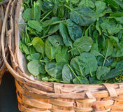 Organic spinach Stock Photography