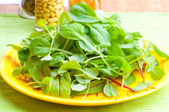 Organic Spring Mix Lettuce Stock Photos