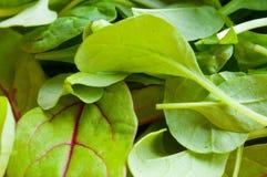 Organic Spring Mix Lettuce Stock Photo