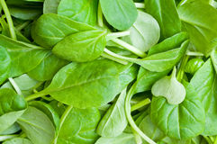 Organic Spring Mix Lettuce Stock Images