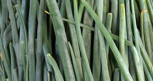 Organic spring onion , fresh, Stock Image
