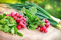 Organic spring radishes Stock Photos