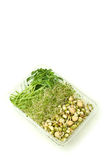 Organic sprouts Royalty Free Stock Photo
