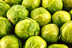 Organic sprouts Stock Images