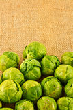 Organic sprouts on jute. A closeup of organic brussel sprouts on a jute background Royalty Free Stock Photography