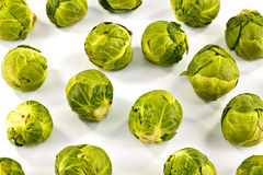 Organic sprouts on white Royalty Free Stock Images