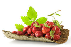 Organic Strawberries Stock Image