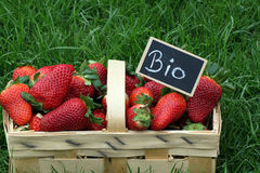 Organic Strawberries Royalty Free Stock Photo