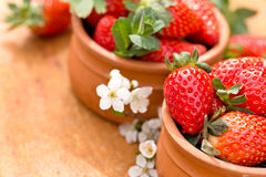 Organic strawberries in bowl Royalty Free Stock Photo