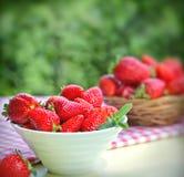 Organic strawberries Stock Photography