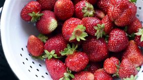 Organic strawberries stock video footage