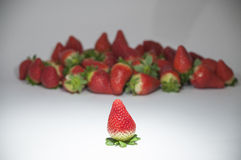 Organic strawberries grouped Royalty Free Stock Images