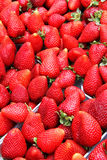 Organic strawberries in a pile. Bio market concept, food background Royalty Free Stock Photo