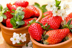 Organic strawberries - seasonal fruit Royalty Free Stock Photos
