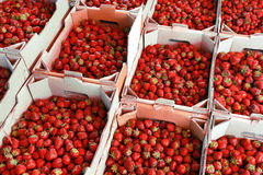 Organic strawberry in baskets on the market Stock Photo