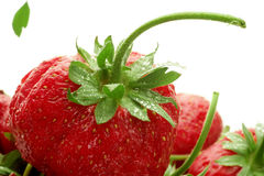 Organic strawberry berry leaf Royalty Free Stock Photos