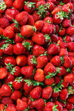 Organic strawberry - full frame. Top view, high resolution product Stock Image