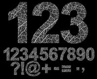 Organic style numbers Stock Photography
