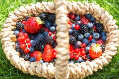 Organic summer berries. Selective focus stock photo