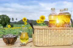 Organic sunflower oil in the glass jar with sunflower seeds, Outdoors royalty free stock images