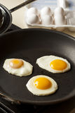 Organic Sunnyside up Egg Stock Images