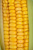 Organic sweet corn Stock Photography