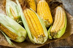 Organic sweet corn Royalty Free Stock Photography