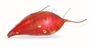 Organic sweet potato Royalty Free Stock Photos