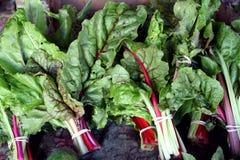 Organic swiss chard at a market Royalty Free Stock Photography