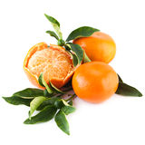 Organic Tangerine Fruit with Green Leaves Royalty Free Stock Photography