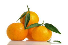Organic Tangerines. Isolated on Wihte background Stock Images