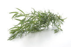 organic tarragon and a white background Royalty Free Stock Photo