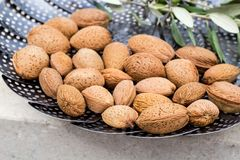 Raw almonds in shell. Organic tasty raw almonds in shell Royalty Free Stock Images