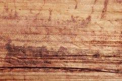 Organic Texture Stock Image