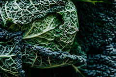 Organic texture. Fresh Green Kale most useful vegetables on whit Stock Photography