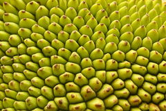Organic Texture of a Jack fruit`s outer skin. Stock Photos