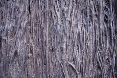 Organic Textured Background Stock Photography