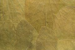 Organic textured background from leaves Stock Image