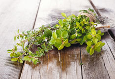 Organic thyme closeup on wooden table. Freshly harvested bunch of thyme tied up with thread on wooden background royalty free stock photo