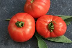 Organic tomato from rural permaculture. Stock Photography