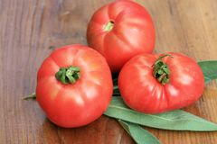 Organic tomato from rural permaculture. Stock Image