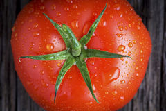 Organic tomato with Water Droplets Closeup Royalty Free Stock Image