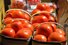Organic tomatoes Royalty Free Stock Photos