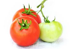 Organic tomatoes. Fresh organic tomatoes on white background Royalty Free Stock Photography