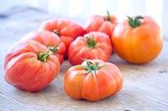 Organic tomatoes Stock Images