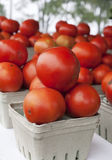 Organic Tomatoes Stock Image