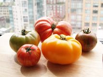 Organic tomatoes. A whole bunch of fresh, colorful organic tomatoes Royalty Free Stock Photo