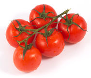 Organic tomatoes Stock Photography